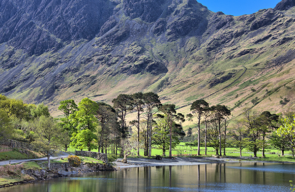 Buttermere Pines with Haystacks in the background