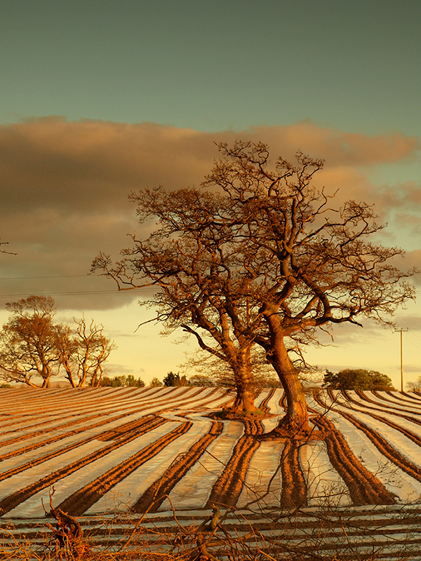 Plowed Field near Whinnow (Thursby)