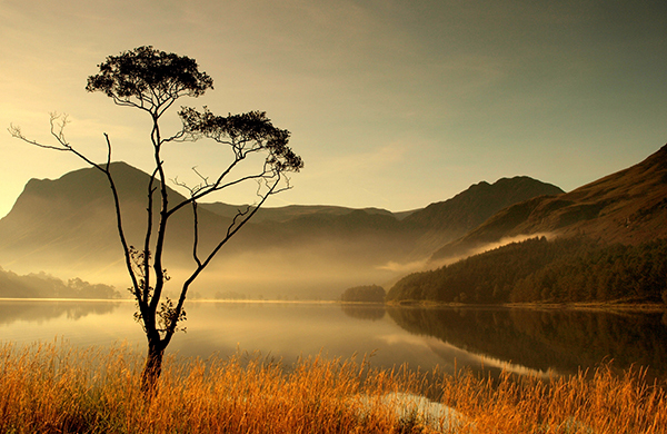 Lone tree at south end of Buttermere